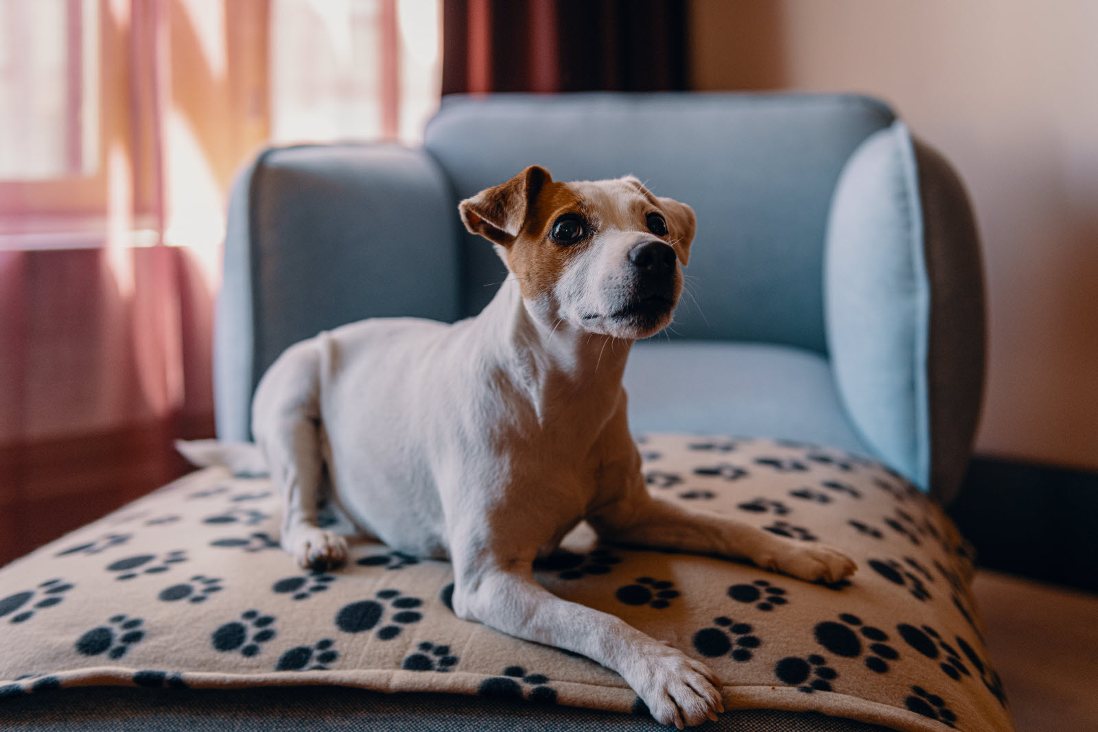 Bring your pet | Scandic Hotels
